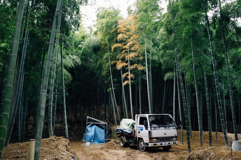 Inari 32.jpg