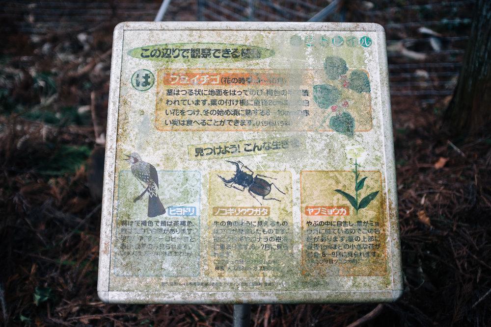 Inari 39.jpg