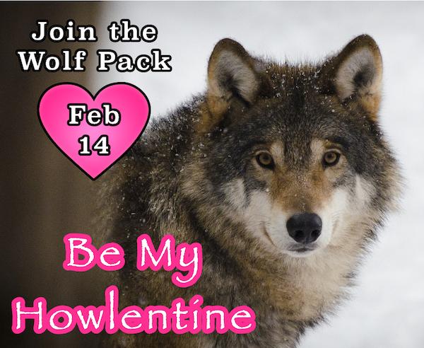 WP Howlentine Feb 2019 1.png
