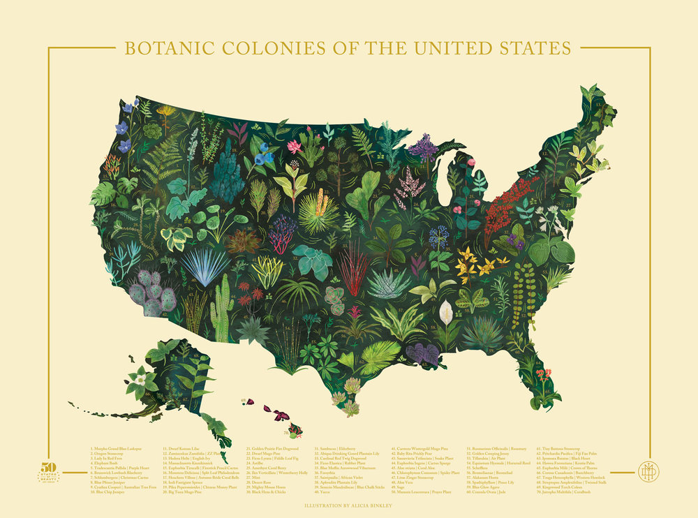 50 States of Beauty (New) — Familytree on canada map plain, 50 states list, large usa map plain, south america states map plain,