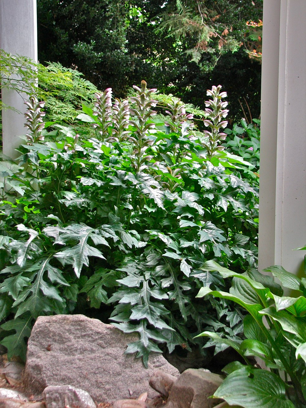 Acanthus is purposefully placed near porch columns.