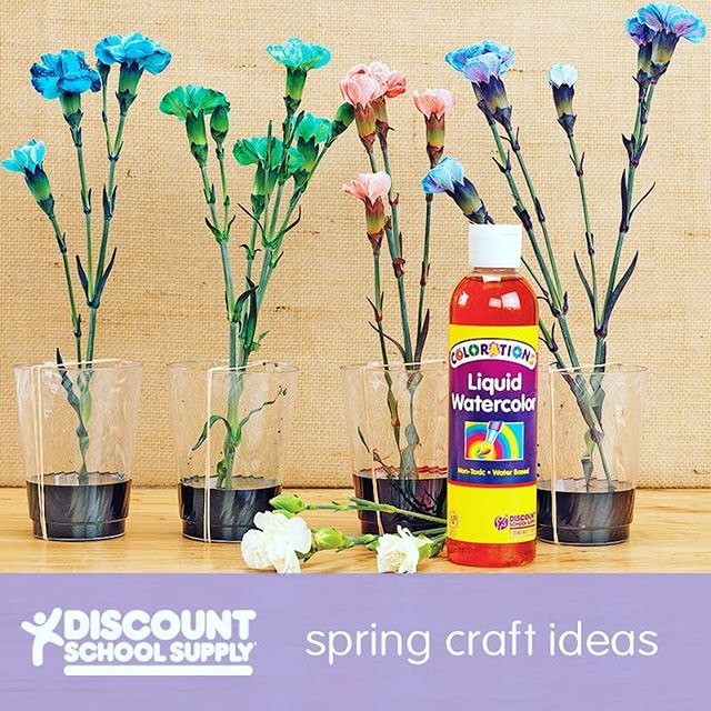 Liquid Watercolor™ Flowers http://bit.ly/2ERvQvr An Activity for Preschoolers: Celebrate spring while learning about plant science!  Before You Begin: Prepare a space to store your flowers overnight, and gather the following materials: clear plastic cups, rubber bands, Liquid Watercolor™ and fresh white flowers.  Activity Goals:  To illustrate how flower stems absorb nutrients by letting them absorb color.  Furthermore: This is a great STEM activity. The changing color of the flowers demonstrates the properties of plants and how they absorb nutrients.  1) Stretch two rubber bands from top to bottom over each cup to hold flowers in place. 2) Place the plastic cups onto a flat surface and fill each with a different color of Liquid Watercolor™. 3) Clip flower stems at an angle on the bottom and place them in each cup. 4) Leave the flowers out to absorb the color. Some flowers will absorb the color overnight, while other flowers may take longer. 5) Enjoy the observation process, as well as the final flower colors!  #invitationtoplay #learningthroughplay #earlylearning #preschool #toddler #toddleractivities #totschool #toddlerlearning #teachingtoddlers #playmatters #earlyeducation #teachingathome #homeeducation #toddlertime #oursensorykids #earlylearning101 #getcreativewith #kidartlit #toddlercrafts #toddlerart #littleartist #craftsforkids #kidscrafts101 #invitationtocreate #steam
