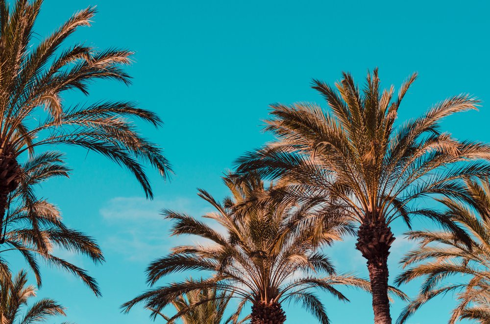 Palm Sunday Versus Passion Sunday