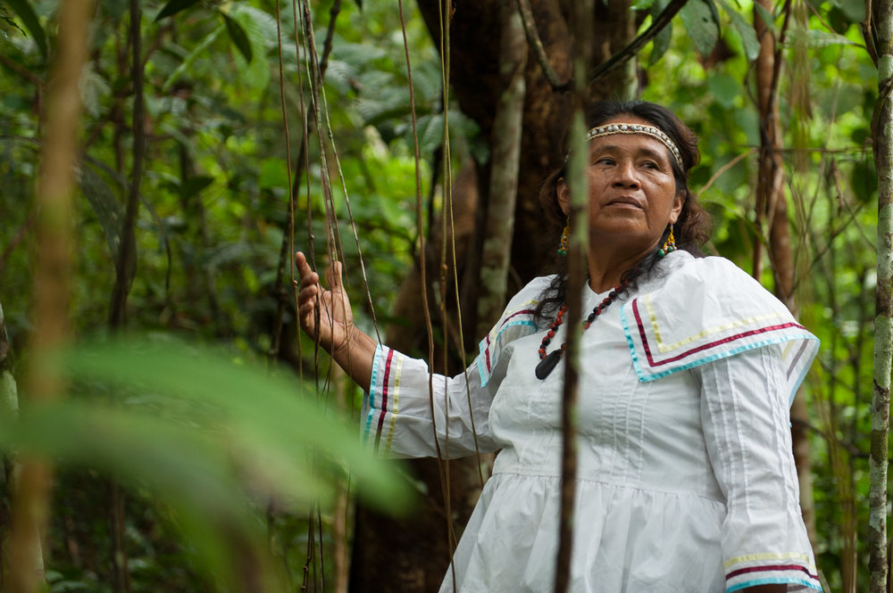 Ema Tapullima, the community leader of the Kukama Kukamila people of Puerto Prado, Brazil, stands amidst the Amazonian forest that she works to protect.  After witnessing the destruction of her neighbors' forests along the Marañon River, she reached out to a local NGO  to protect the forest as a private conservation area -- the first of its kind in Peru.