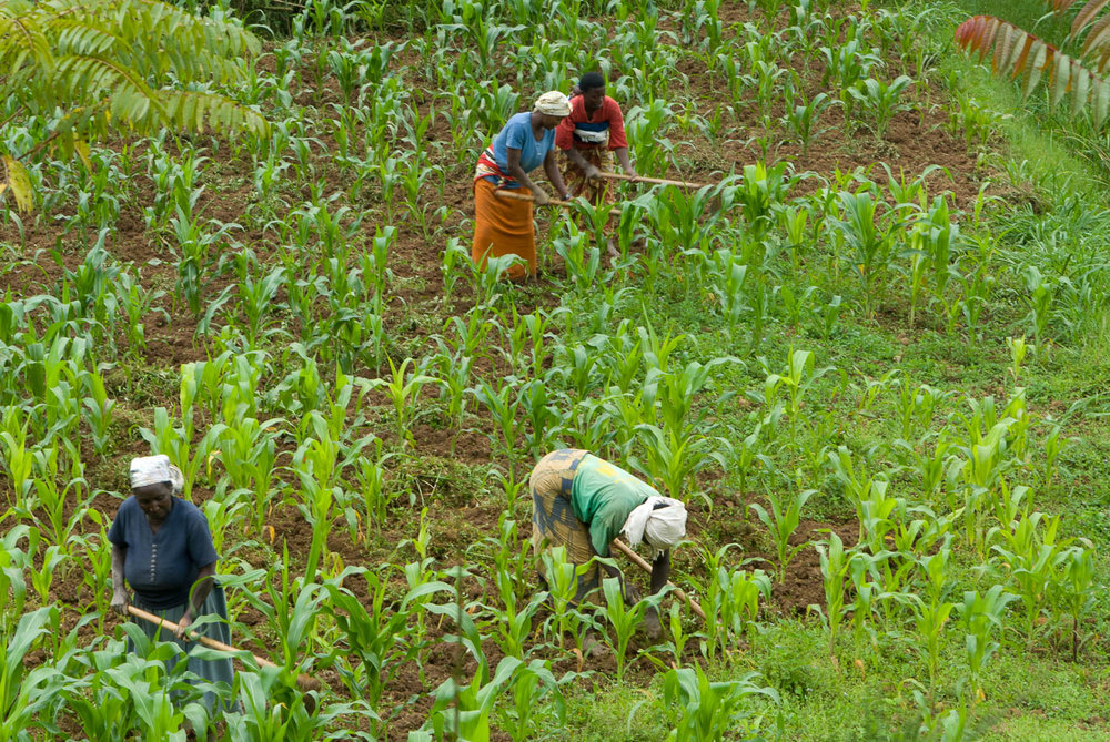Although women comprise an estimated 43% of the agricultural labor force around the world, women are typically denied equal rights to access, use, inherit, control, and own land. Landlessness is the number one predictor of poverty.