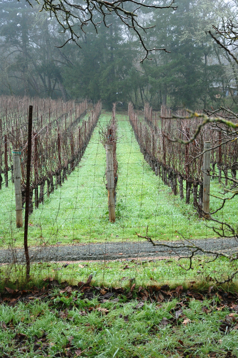garden wine grapes.jpg