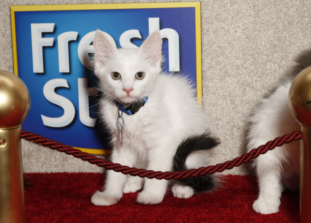 Kitten on Red Carpet 2 copy.jpg