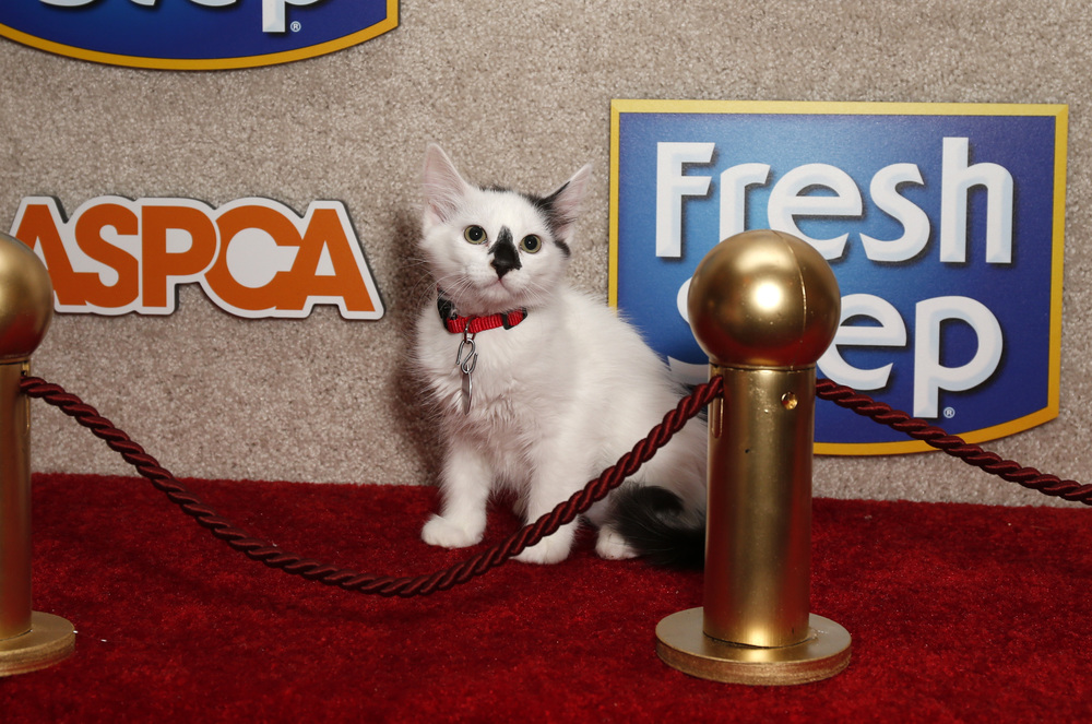 Kitten on the Red Carpet copy.jpg
