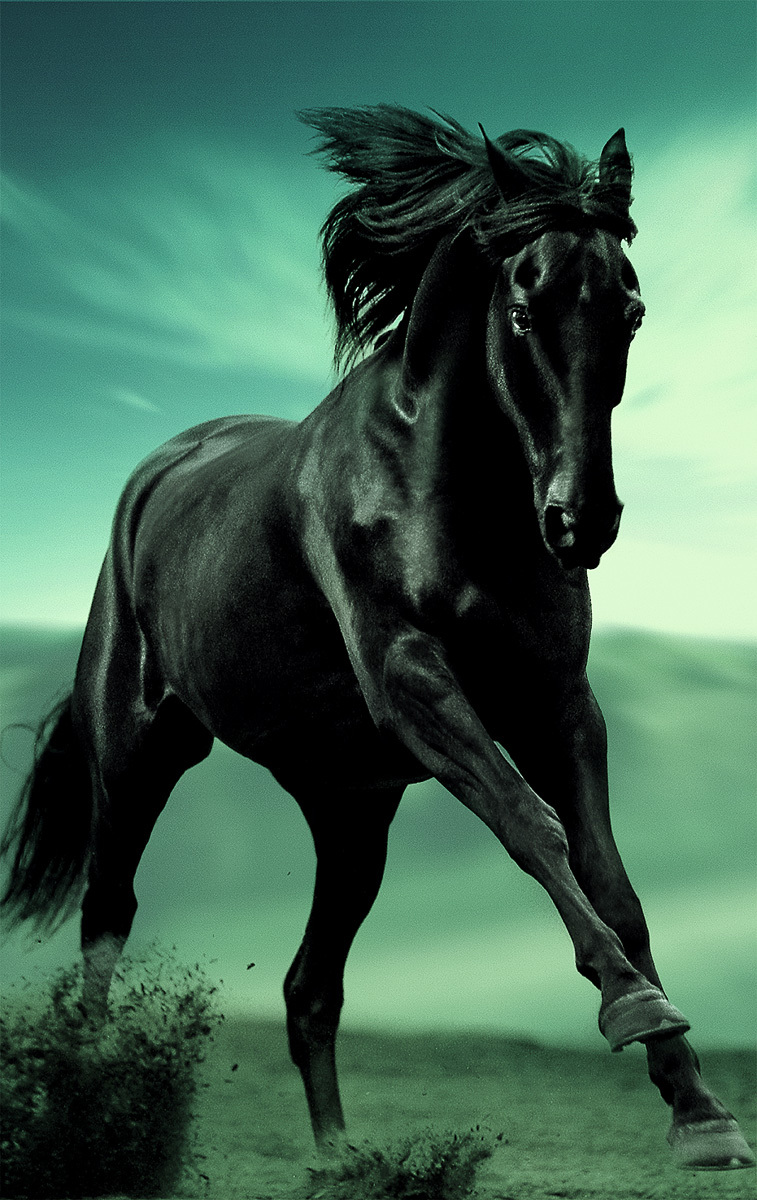 National Bank Black Horse