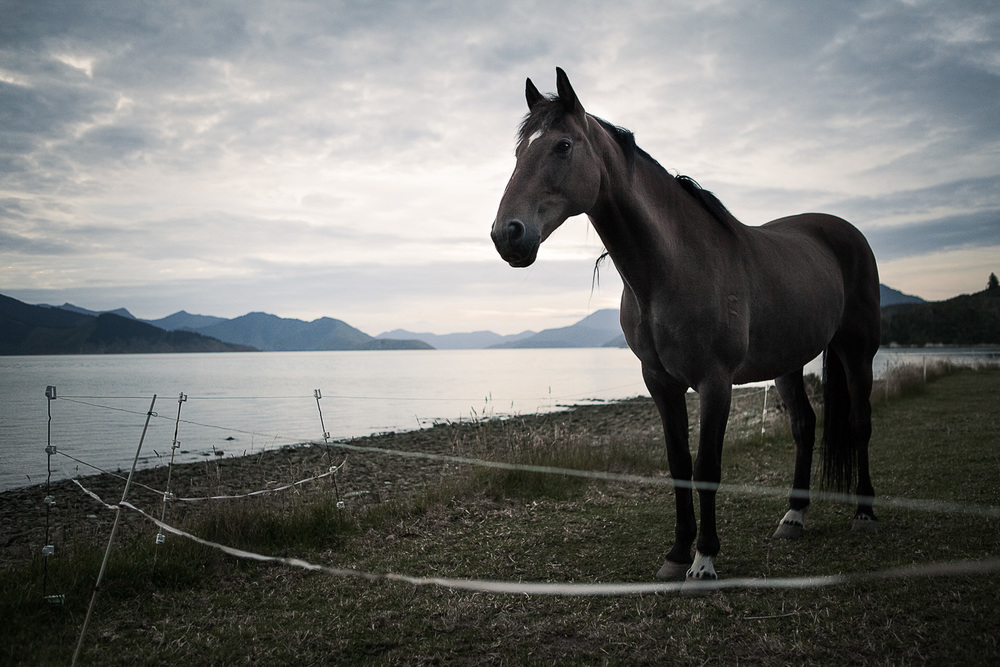 Horse Marlborough Sounds 2012