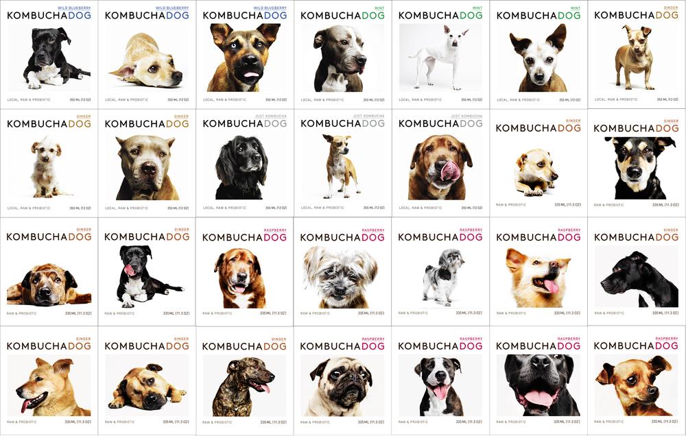All 28 front labels of bottles of Kombucha Dog