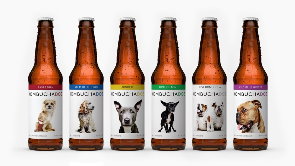 Four bottles four flavors of Kombucha Dog
