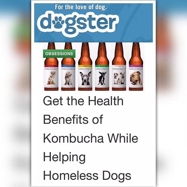 "Thanks to @dogster for showing us some love. ""Tea line Kombucha Dog features adoptable dogs on its labels, combining healthy living with helping dogs find forever homes."""