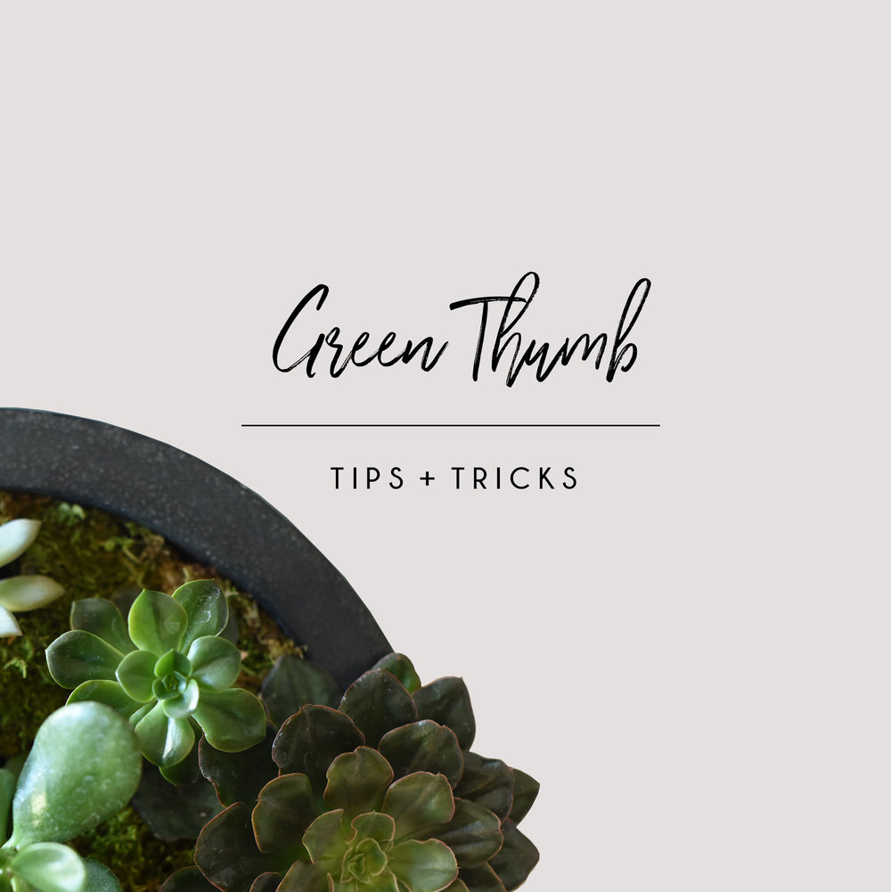 GREEN-THUMB-TIPS-AND-TRICKS.jpg