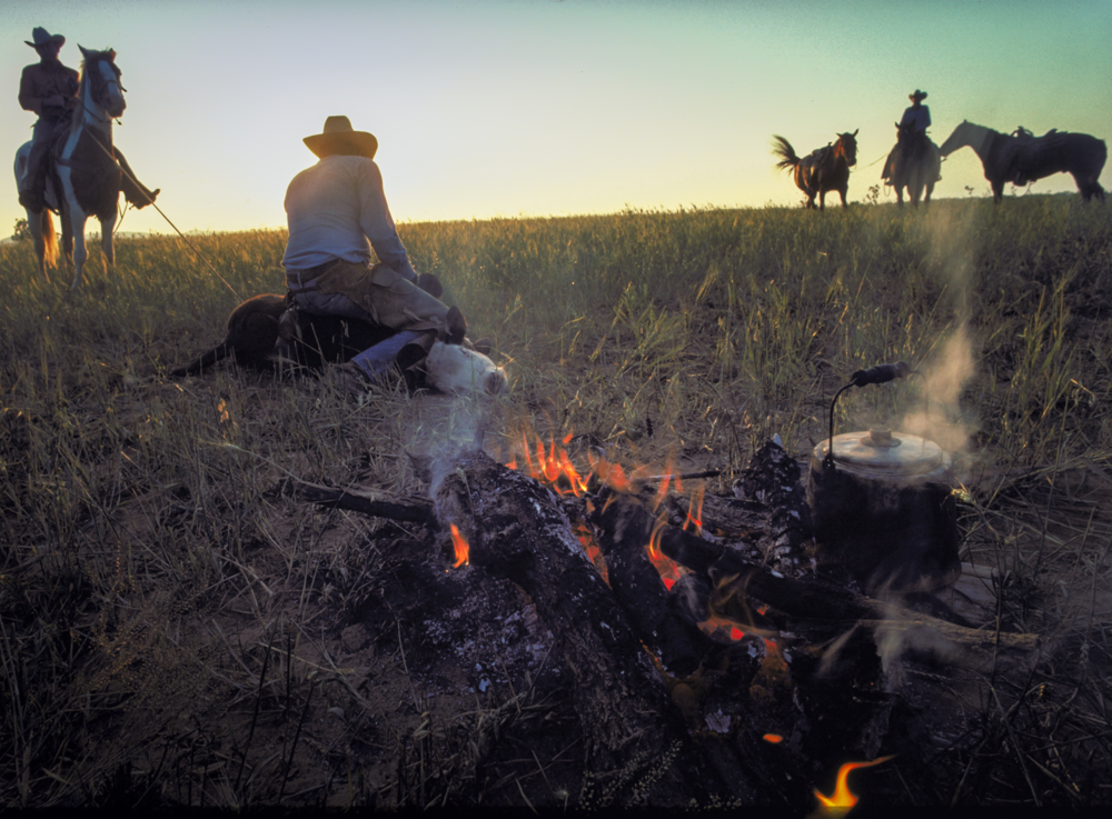 Cowboys, campfire and cattle branding at dawn