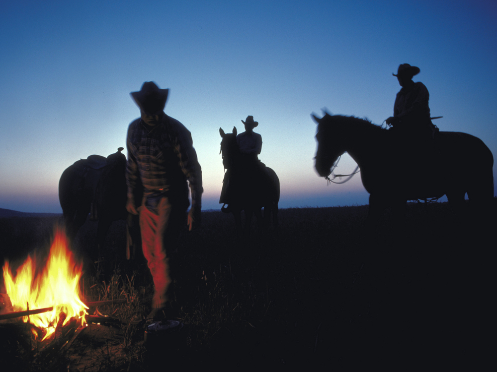Cowboys with campfire at dawn for cattle round-up