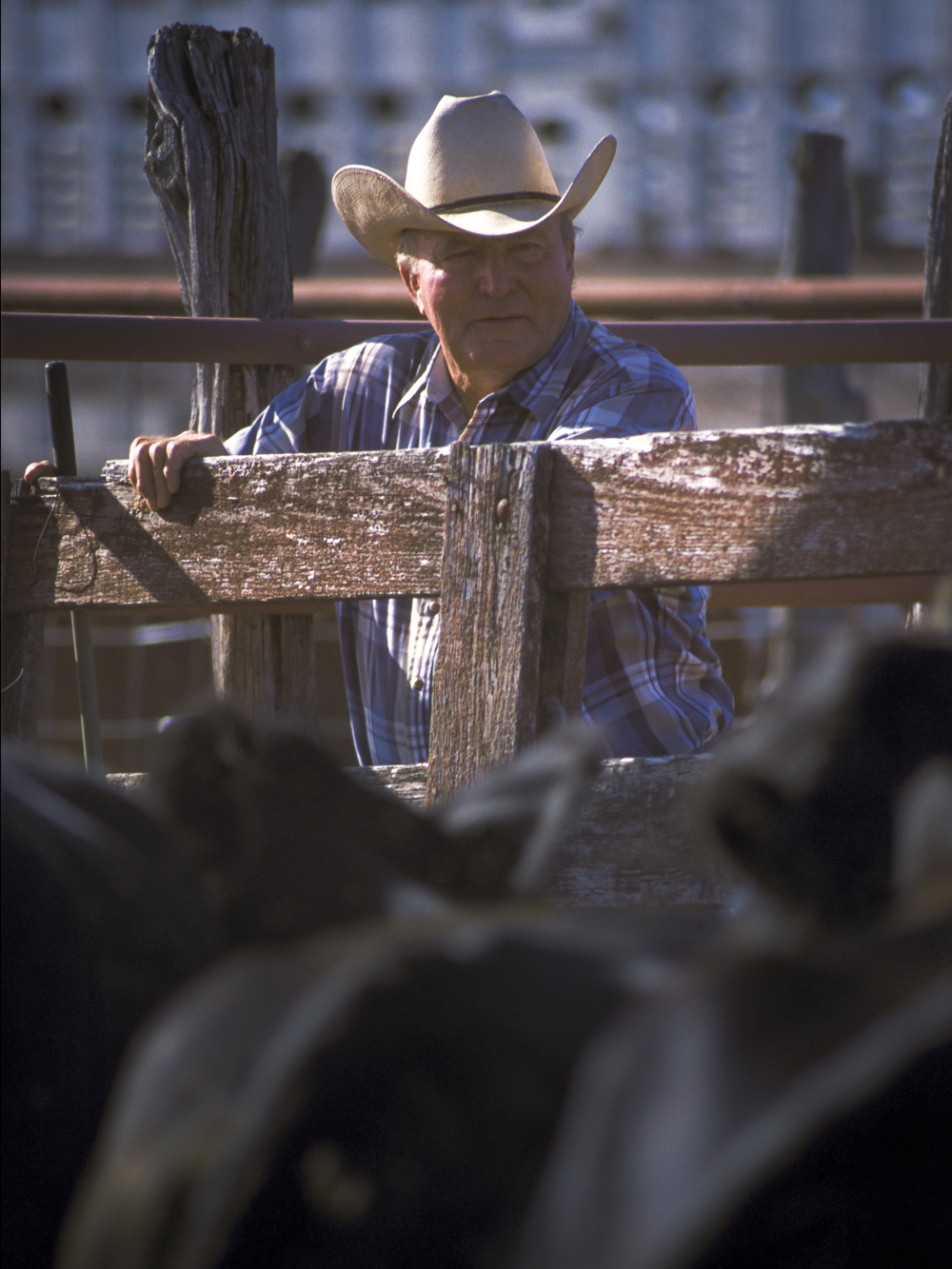 Cattle rancher, North Texas Copyright © Kipp Baker, All rights reserved