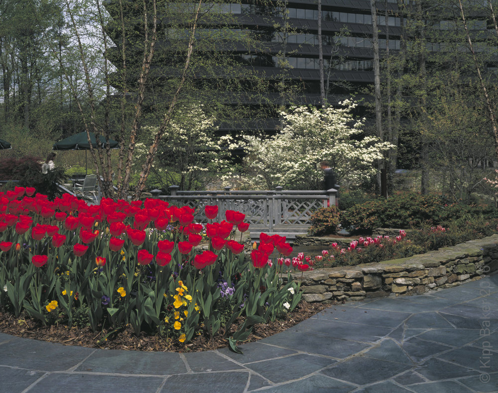 Three Ravinia Drive / MCI Office park, Atlanta, GA, USA.    Architect Kevin Roche  , John Dinkeloo & Associates  .