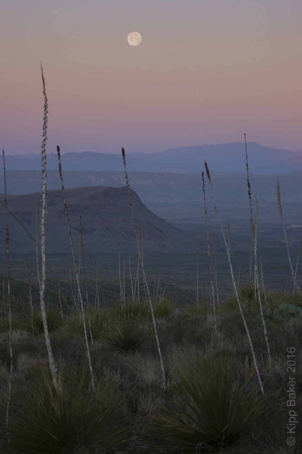 Moonset at dawn, Sotol Vista, Big Bend National Park Copyright © Kipp Baker, All rights reserved.