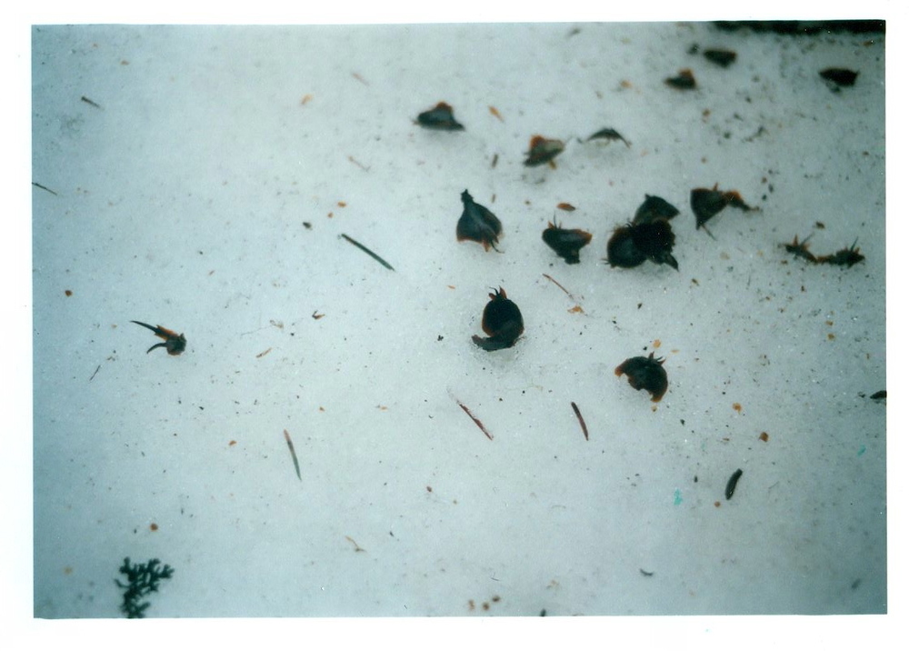 seeds, Breitenbush, 2012
