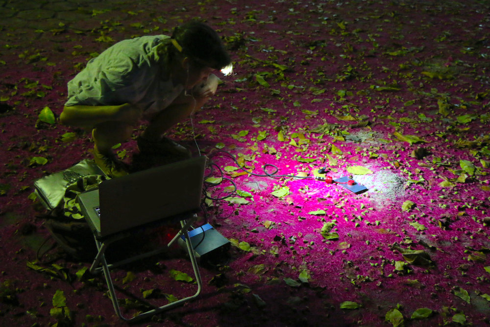 photo by Laura Gorski - recording  Atta cephalotes  in Reserva Aldolpho Ducke at night