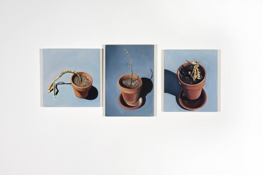 Elizabeth Saveri  Dead Plant Triptych  2008 Oil on wood, three parts 6h x 14w in ESave115