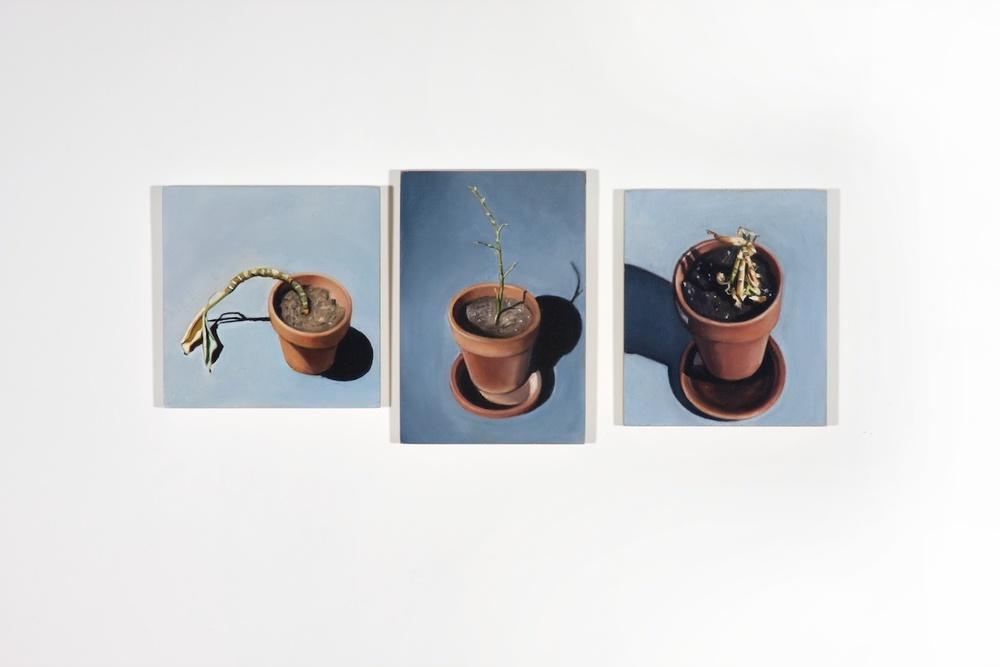 Elizabeth Saveri  Dead Plant Triptych , 2008 Oil on wood, three parts 6 x 14 in ESave115
