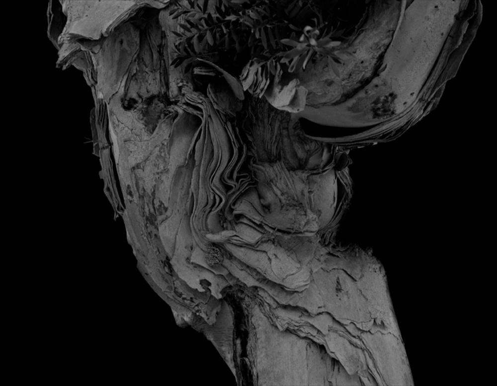 "Amir Zaki At What Point is the Wax No Longer Wax #11 2007 Ultrachrome archival photograph 12"" x 15 1/4"" AZ005"
