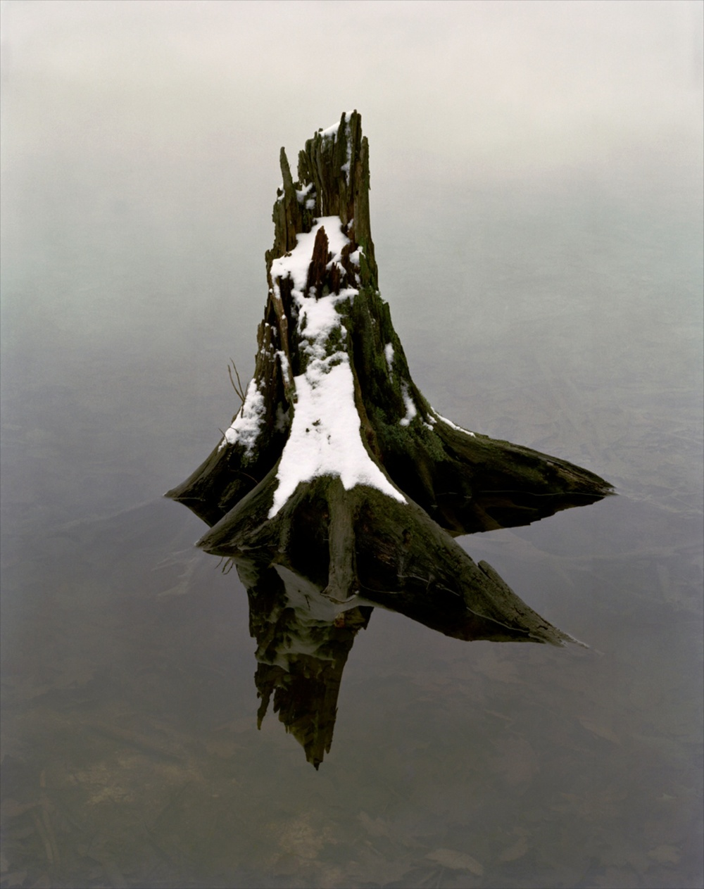 "John Opera Stump in Black Pond 2006 C-print 40"" x 30"" JO004"