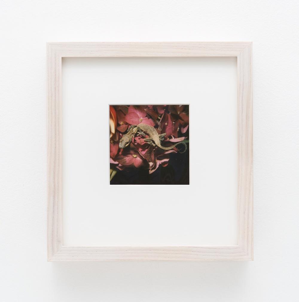 """Nobuyoshi Araki Flower 2006-2009 Polaroid 4 ¼""""x 3 ½"""" NA031"""