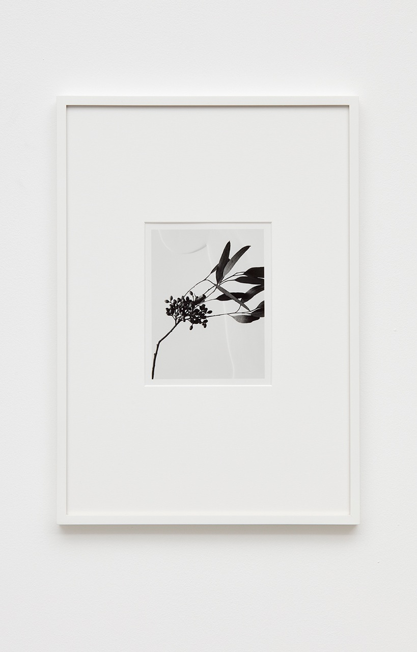 Anthony Pearson  Untitled (Flora)  2016 Silver gelatin photograph in artist frame 17h x 12w x ¾d in Unique AP420