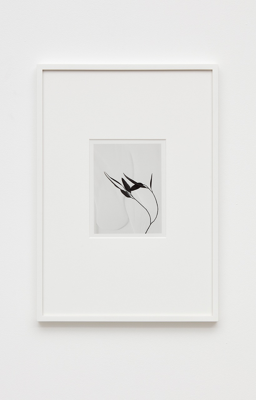 Anthony Pearson  Untitled (Flora)  2016 Silver gelatin photograph in artist frame 17h x 12w x ¾d in Unique AP422