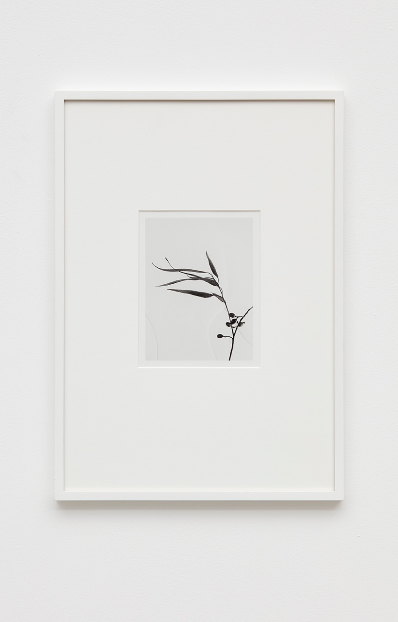 Anthony Pearson  Untitled (Flora)  2016 Silver gelatin photograph in artist frame 17h x 12w x ¾d in Unique AP419