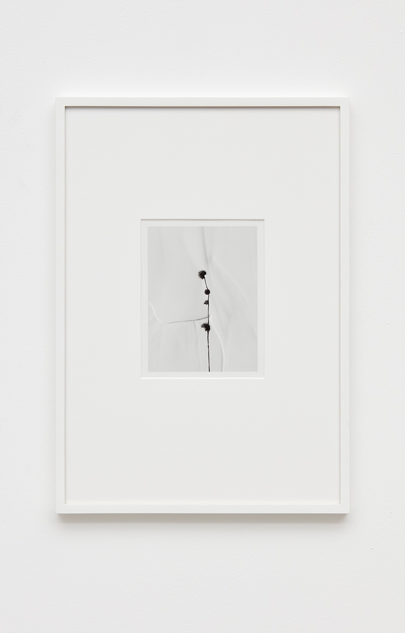 Anthony Pearson  Untitled (Flora)  2016 Silver gelatin photograph in artist frame 17h x 12w x ¾d in Unique AP421