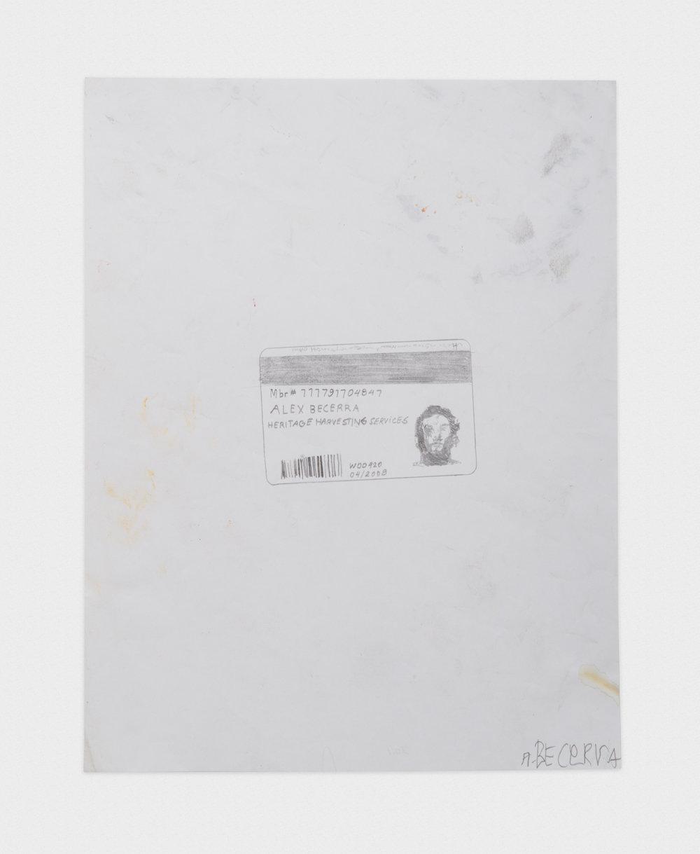 Alex Becerra Costco Card I.D. 2016 Graphite on paper 11 x 8 1/2 in (27.94h x 21.59w cm) AB431