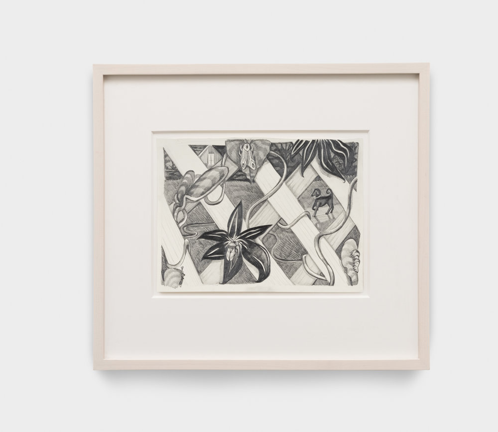 Nikki Maloof  Garden Fence   2017 Graphite on paper 8 ¼h x 8 ¼w in 16h x 19w in framed NM018