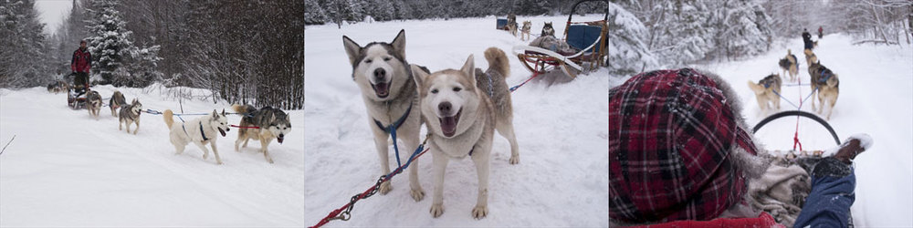 Shrek and Suzy are two of the dogs happily running through Ontario's snowy trails. (Photo by Jeff Cunningham/For the Hamilton Spectator)