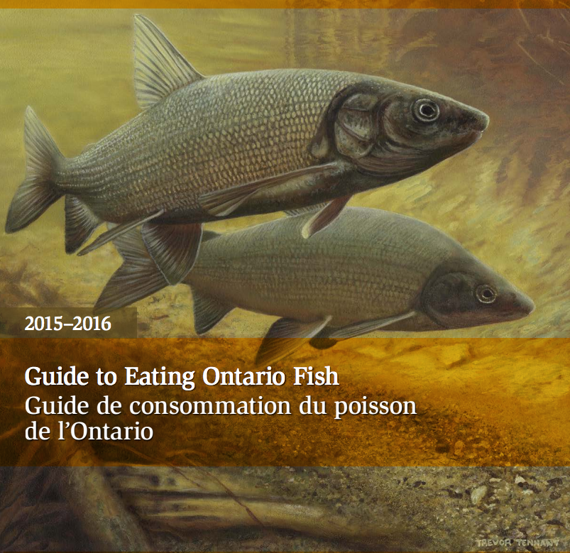 Look through the Guide to Eating Ontario Fish.  (Image via the Ontario Ministery of the Environment and Climate Change)