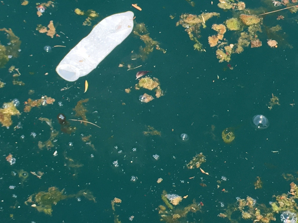One of the thousands of floating condoms Mark spotted in the floating debris off Toronto's eastern shoreline on July 8, 2016. (Photo by Mark Mattson)