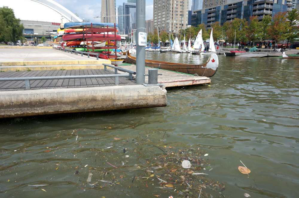A feminine pad can be seen floating in a cluster of debris at one Toronto Harbour's recreational hotspots. (Photo by Lake Ontario Waterkeeper)