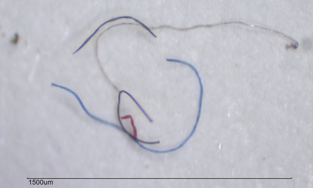 Microfibres up close, measuring under 1500um. (Image via  DebrisFreeOceans.org )