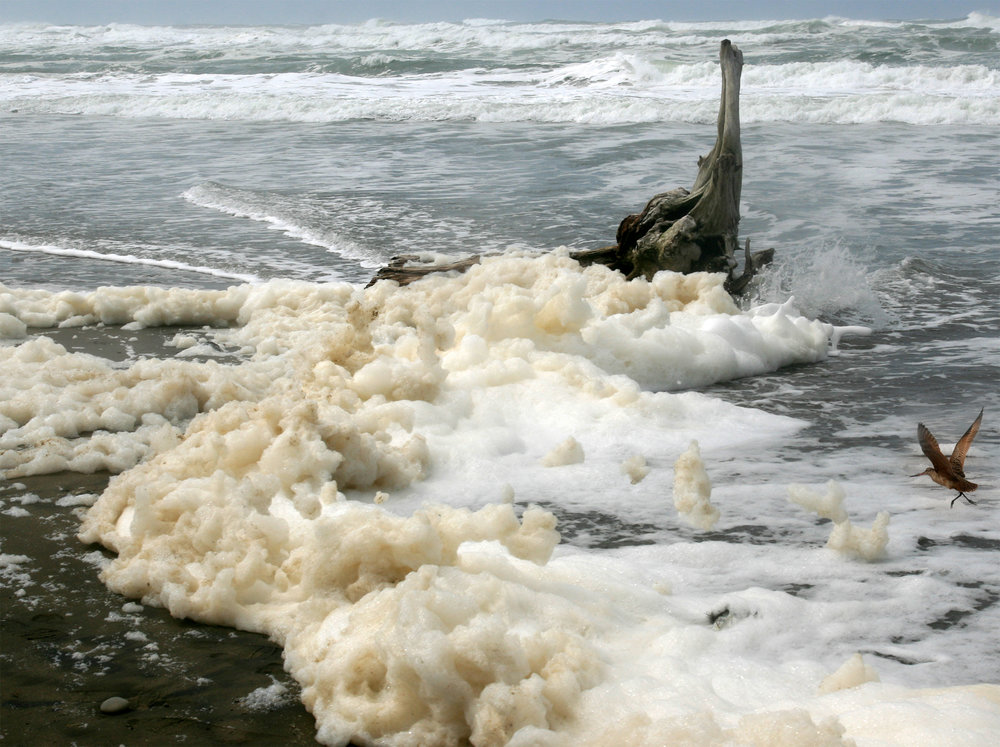 Buildup of foam along a beach in San Francisco. Photo credit: Brocken Inaglory, CC BY-SA 3.0