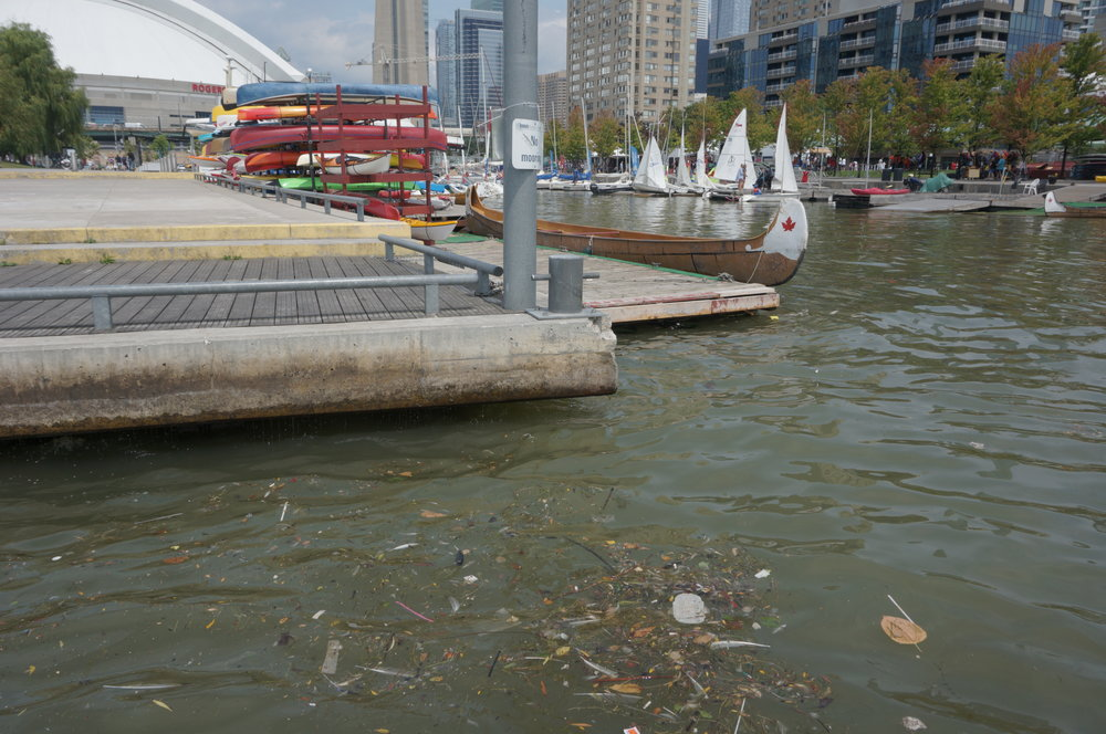 Sewage pollution near Rees St. Slip in the Toronto Harbour. Photo credit: Photo by Russell Black / Lake Ontario Waterkeeper.