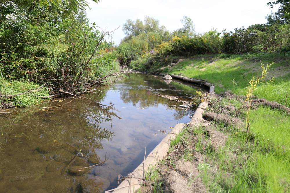 Newly installed cable log jam. Site of the redside dace sighting - Fletcher's Creek Brampton