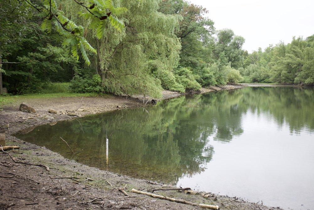 Drawdown of Muskrat Pond begins Courtesy of Dylan Neild