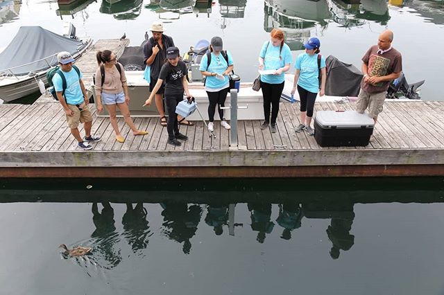 Swim season has arrived and so has Toronto harbour monitoring. This year Swim Drink Fish launched the Toronto Community Monitoring Program, a continuation of our monitoring efforts in 2016 and 2017. • The monitoring team meets Tuesday and Thursday mornings each week. We'd love for you to join us! Link in bio for details. • Thank you to The @muskokabrewery and @evergreencanada Fresh Water Grant Program and our friends at @swimguide for making this project possible. 💙 • #swimdrinkfish • 🏊‍♀️💧🎣