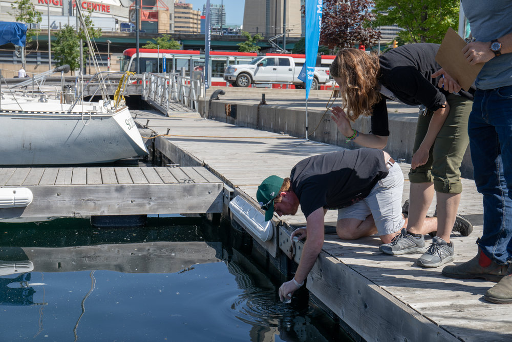 A Toronto Community Monitoring Program volunteer collects a water sample from Toronto Harbour.