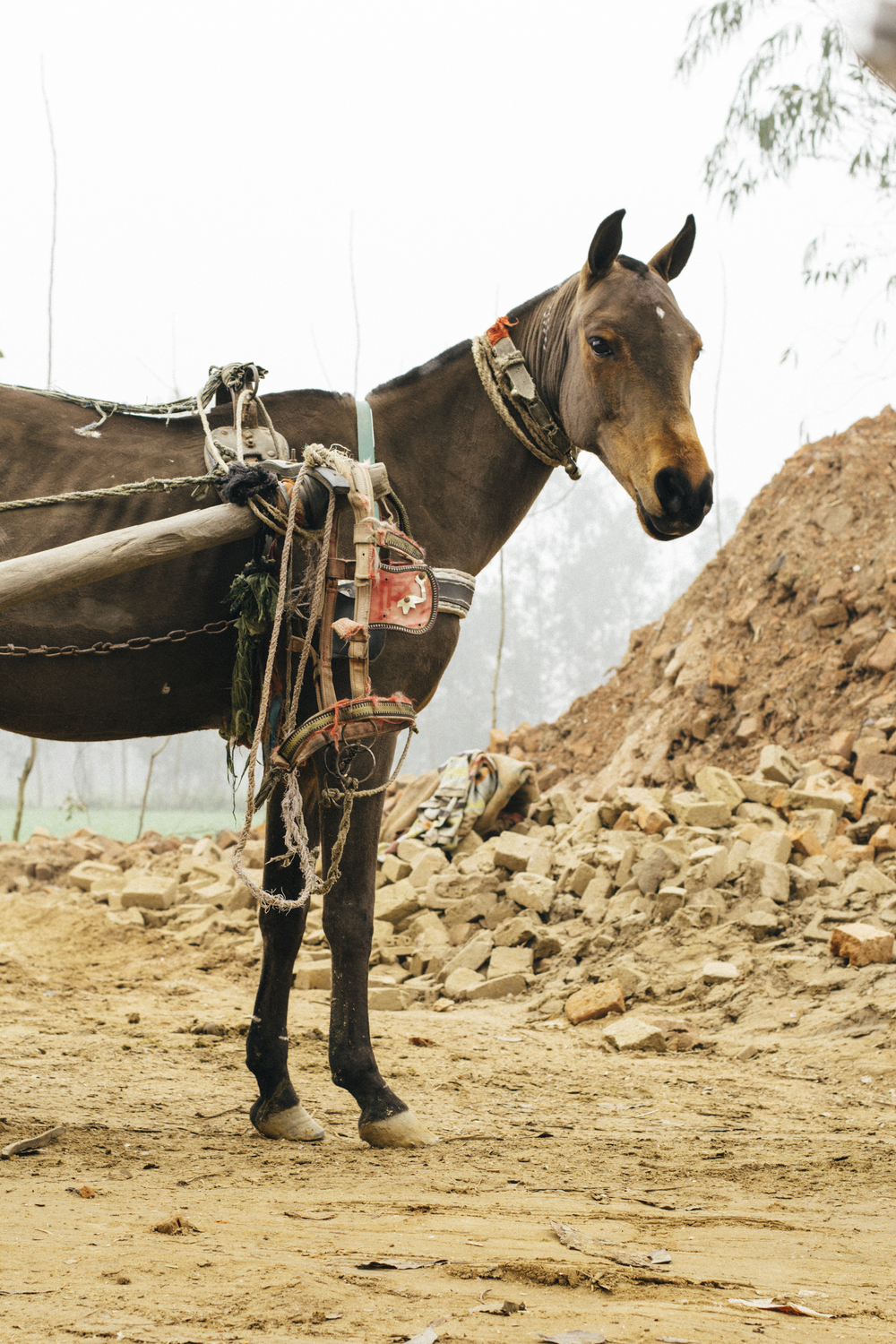 Working horse in the brick kilns, India