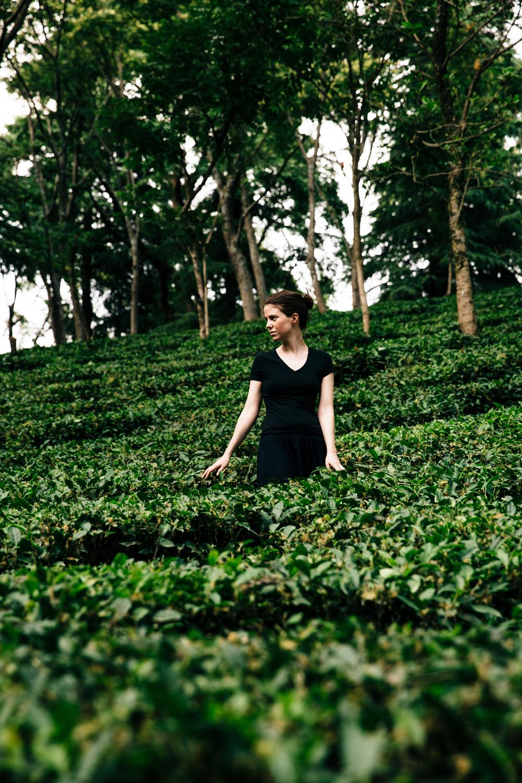 Tea gardens, Palampur