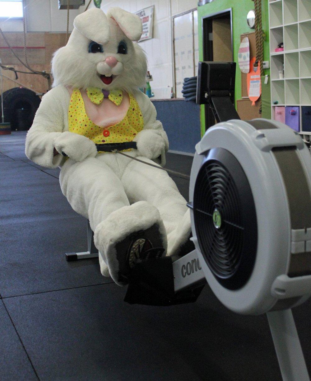 Easter-Bunny-Row.jpg